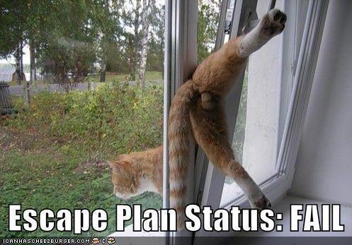 cat-stuck-in-door
