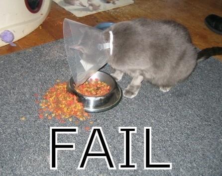 cat-stuck-in-funnel