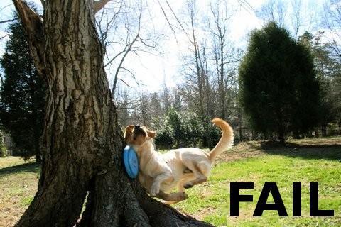 dog-hits-tree