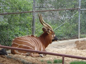 Horns That Kill