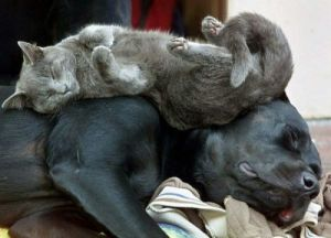 Sleepy Cat On Dog