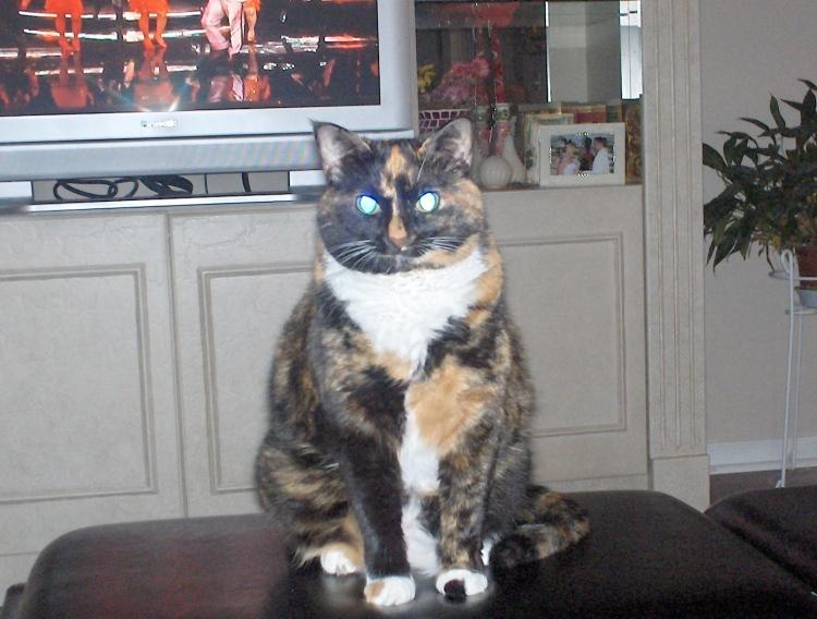 Pumpkin - My Parent's Phat Cat